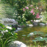 Laghi ornamentali Loreggia (2)